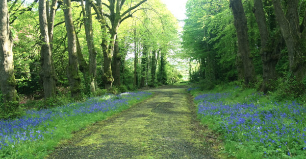Photo of a path lined with bluebells and trees. Find your path with Soul Ambition coaching.